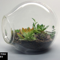 Large Bubble Glass Terrarium, Hand Blown Glass Terrarium, Recycled Glass Terrarium, Organic Succulent Garden