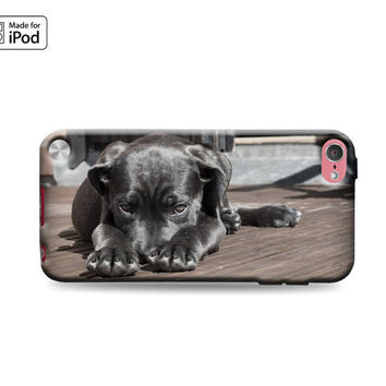 Black Lab Labrador Retriever Dog Puppy on Porch Best Friend Shy Cute Fun Rubber Case for iPod Touch 6th Generation Gen or iPod Touch 5th Gen