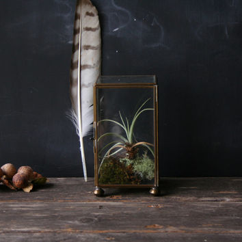Vintage Terrarium Cloche Box Glass and Brass Nature Display Home Decor From Nowvintage on Etsy