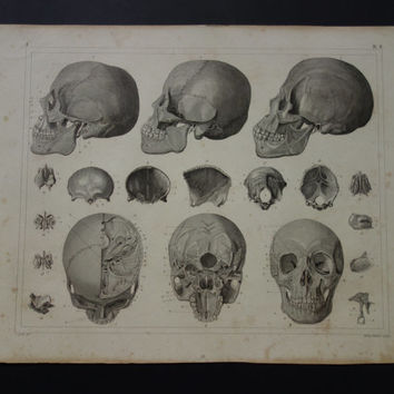 Original 1849 antique anatomy print - old anatomical poster with vintage pictures of skull skulls side front back view - 10x12""