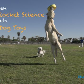 HurriK9: The 100+ Foot Ring Launcher for Dogs