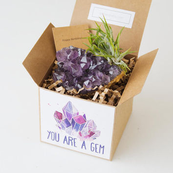 Amethyst Crystal Air Plant Birthday Gift, Best Friend Gift, February Birthstone, Mom Gift, You Are A Gem Long Distance Friend Thank You Gift