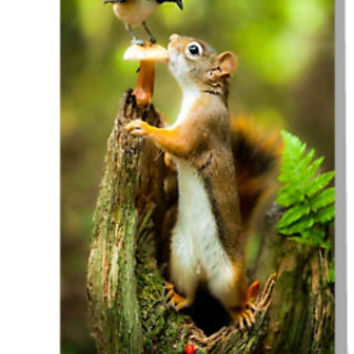 'Chipmunk' Greeting Card by cybermall
