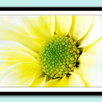 Instant Download Photography, Yellow Daisy, Nature Photography, Downloadable Image, Blog Photo,Stock Photo, Downloadable Digital Print