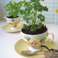 Teacup Herbs ? Accessories ? Recreate