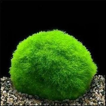 3-4cm Cladophora Live Aquarium Plant Fish Tank Shrimp Nano For MARIMO MOSS BALLS Fish Tank Ornament A35