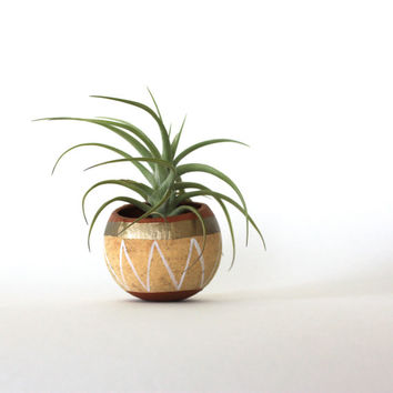 Air Plant Planter with Air Plant -  Natural, Tan, Gold, White.
