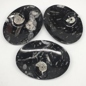 "3pcs,6.25""x4.75""x5mm Oval Fossils Orthoceras Ammonite Bowls Dishes,Black, MF1392"