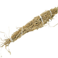 Patchouli Root 1 root bundle (Pogostemon cablin)