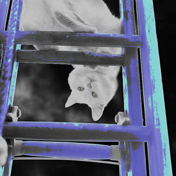 Art Giclee Print Digital Photo Cat Ladder Wall Hangings Wall Decor Metallic Paper Posters FREE SHIPPING in the US