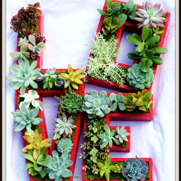 Succulent Monogrammed Planter Box As Seen In Southern Living Christmas at Home MADE TO ORDER