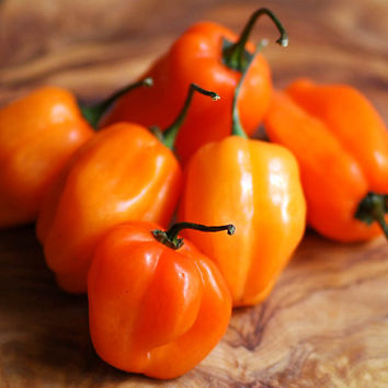 100 Supper Hot Habanero Orange Chilli Pepper - Extremely World's Hottest Vegetable Seeds ! Home Gardening DIY Plant Growing Decor