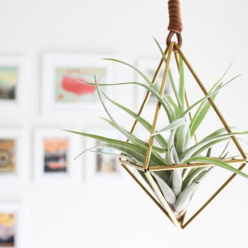 Himmeli fig. 1 - Brass Air Plant Holder | Modern Minimalist Geometric Hanging Ornament