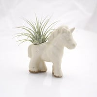 Unicorn air plant planter pod Terrarium