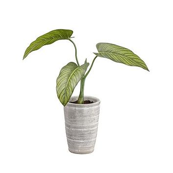 "Artificial Philodendron House Plant in Pot - 12"" Tall"