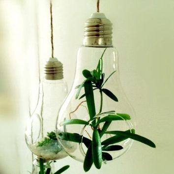 Hanging Glass Hydroponic Light Bulb Vase