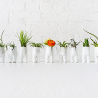 Small Tushiez™ Terrarium - Matte or Glossy Air Plant Holder - 2.5 INCH Tushiez