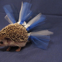Hedgehog /  Guinea pig  tutu-  Sailor Blue