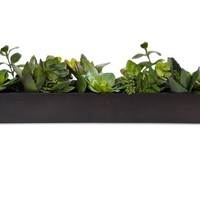 Succulent Planter | Mother's Day | Gifts | Z Gallerie