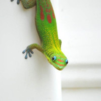 Green Lime Green Gecko Photography 4x6 by Maddenphotography