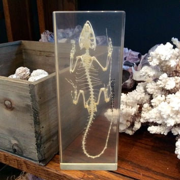 Lizard Skeleton Paperweight