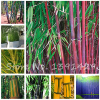 A Package = 40 Pieces Fresh Giant Moso Bamboo Seeds Purifying Air Garden Flowers Seeds DIY Balcony Courtyard Plant
