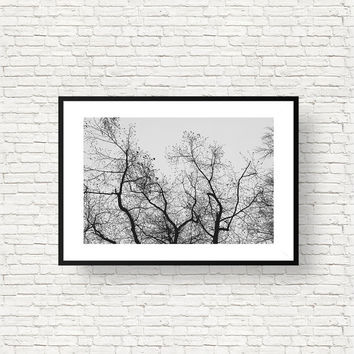 Minimalist Tree Branch Art Print - Black and White Wall Art - Tree Photography, Digital Download | Printable Nature Home Decor by Mila Tovar