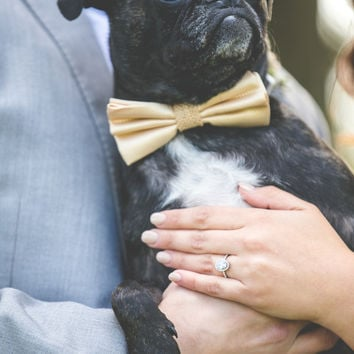 Champagne Dog Bow Tie attached to dog collar, Burlap wedding