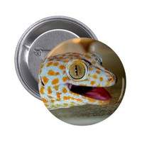Close up portrait of Tokay gecko in TulaZoo Button