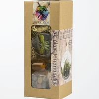 Makers Kit Hanging Air Plant Terrarium Kit - Womens Scarves - Multi - NOSZ
