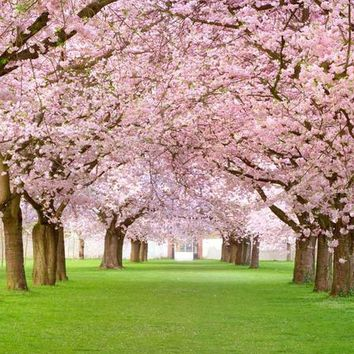 FLOWER BLOSSOM TREE PRINTED PHOTO BACKDROP 5x6 - LCPC2062 - LAST CALL