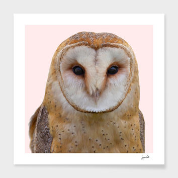 «Owl» Art Print by Suzanne Carter - Numbered Edition from $24.9 | Curioos
