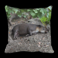 tapir sleeping on sand pillow