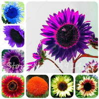 40 pcs/bag Giant Sunflower Seeds Bonsai Flower Seeds Sunflower Russian Sunflower Seeds For Home Garden Planting