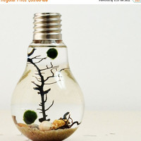 On Sale Marimo Aqua Terrarium// Lightbulb// Desk Accessory// Green Gift