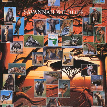 Wildlife of the African Savanna Poster 26x38