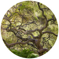 Paul Moore's Japanese Maple Circle wall decal