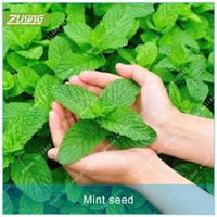 ZLKING 100pcs Mint Seed Fruit Seeds Bonsai Plants For Home Garden Scented Perennial Plants Exotic Fruit Plants