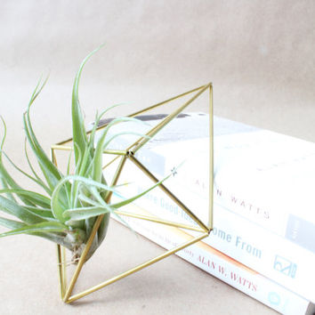 Himmeli Air Plant Wall Prism | Air Plant Holder | Himmeli Ornament