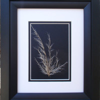 Black and White simplicity - Original Pressed Flower Art, Framed Art, Wall Art, Reiki Charged