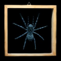 Paxton Gate Double glass framed Tarantula