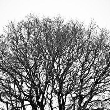 Tree wall canvas, minimalist wall art, nature photography, black and white photography, office decor, fine art photography, large wall art