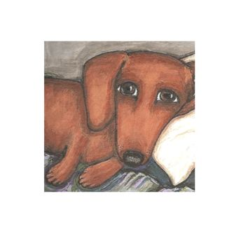 Dachshund on the pillow
