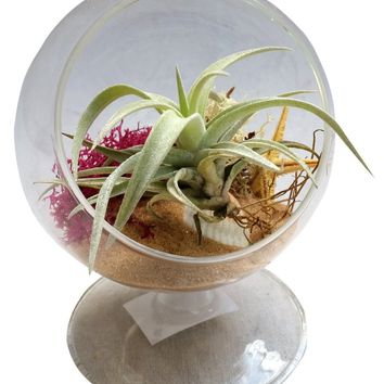 Circle Airplant Terrarium For Desk