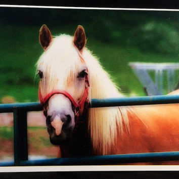 Horse Photography Greeting  Cards Palomino Piebald Appaloosa Set of 3 Equine Equestrian