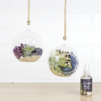 Air Plant Terrarium Hanging Vases, Set of Two Bubbles + Organic Plant Food