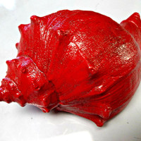 Red Conch Seashell Reiki Healing Alters Base Chakra Nautical Decor Natural Whelk Seashell