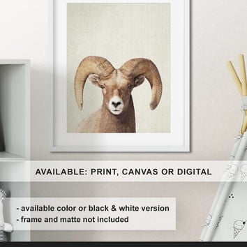Ram print, Bighorn sheep art, Wildlife nursery decor, Ram centerpiece, Wildlife canvas, Ram wall decor, Wildlife photo Print/Canvas/Digital