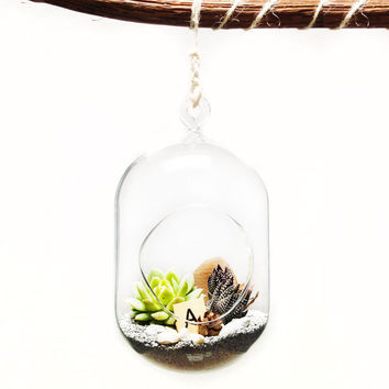Wood Hanging Glass Bubble Succulent Terrarium