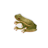 Tree Frog Wildlife Magnet